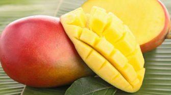la mangue, un fruit tropical